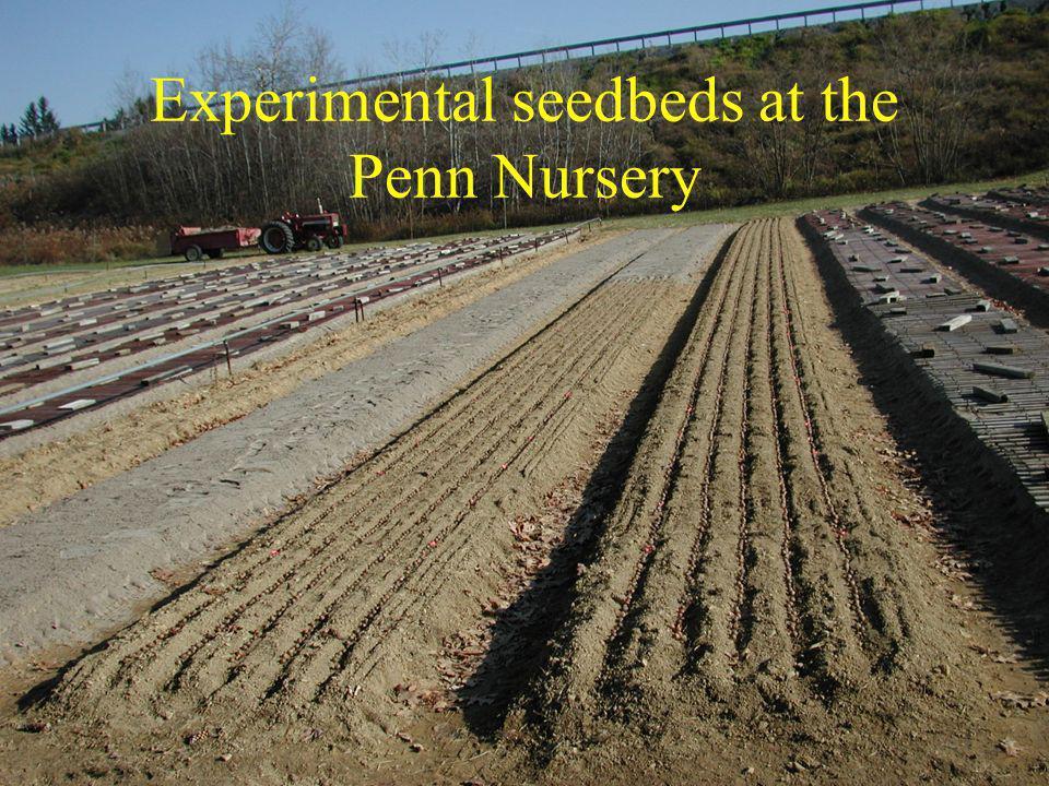 Experimental seedbeds at the Penn Nursery