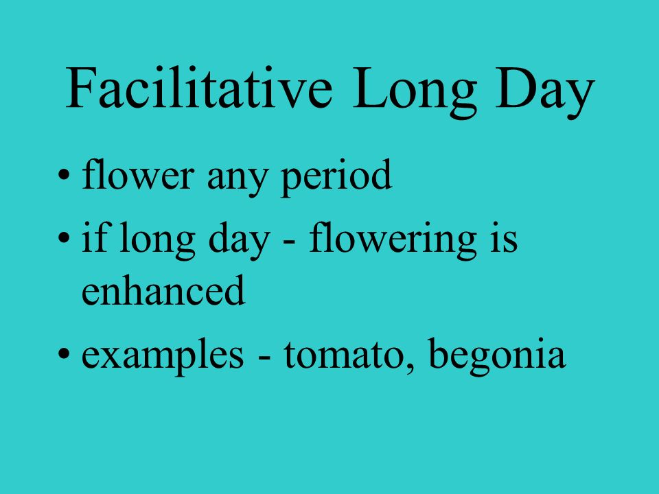 Long Day Plants flower when days are long and nights are short example: lettuce, radish, petunias