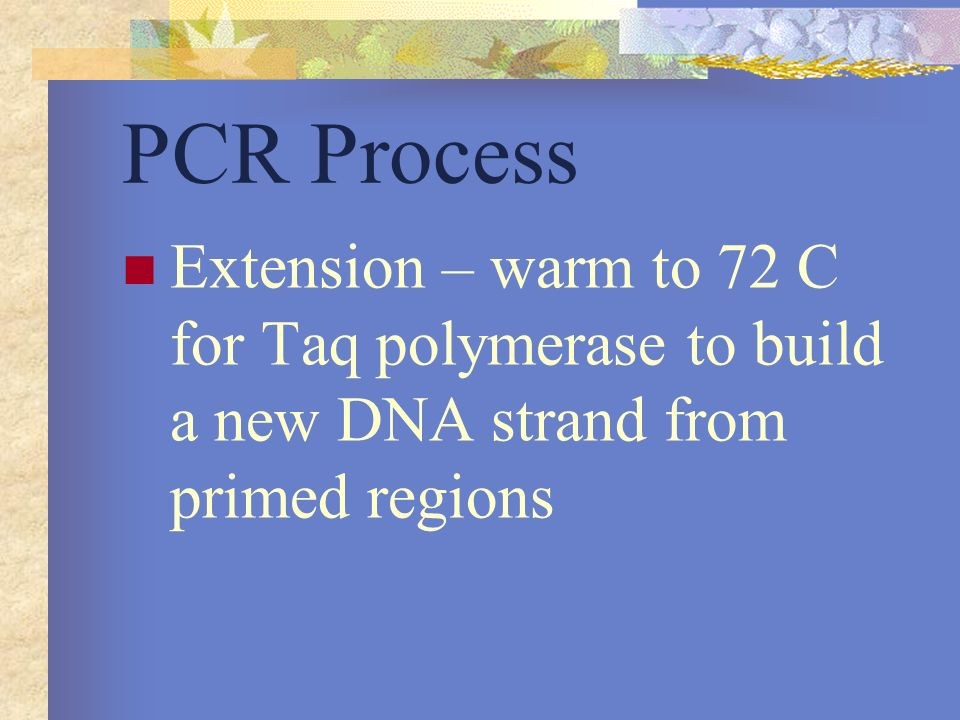 PCR Process Extension – warm to 72 C for Taq polymerase to build a new DNA strand from primed regions