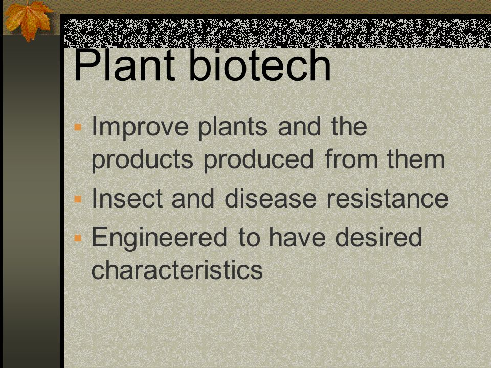 Plant biotech Improve plants and the products produced from them Insect and disease resistance Engineered to have desired characteristics