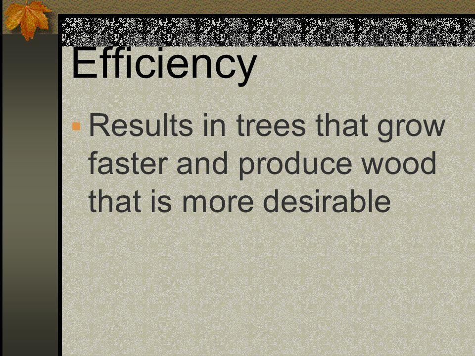 Efficiency Results in trees that grow faster and produce wood that is more desirable