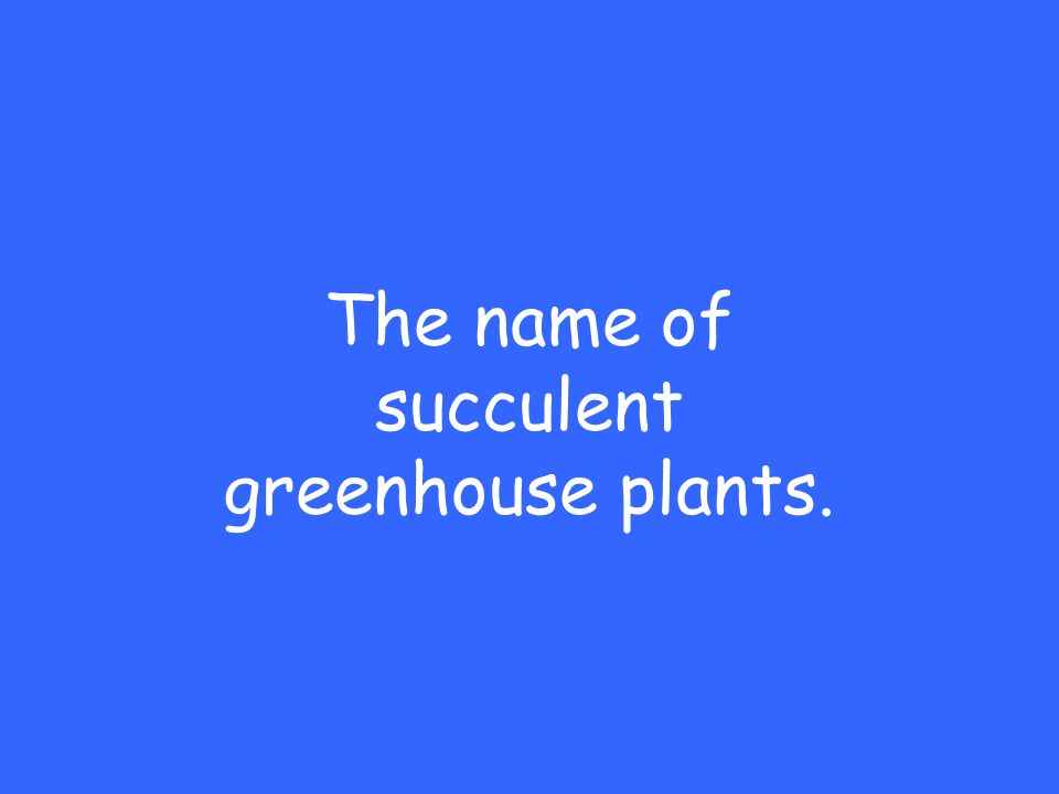 The name of succulent greenhouse plants.