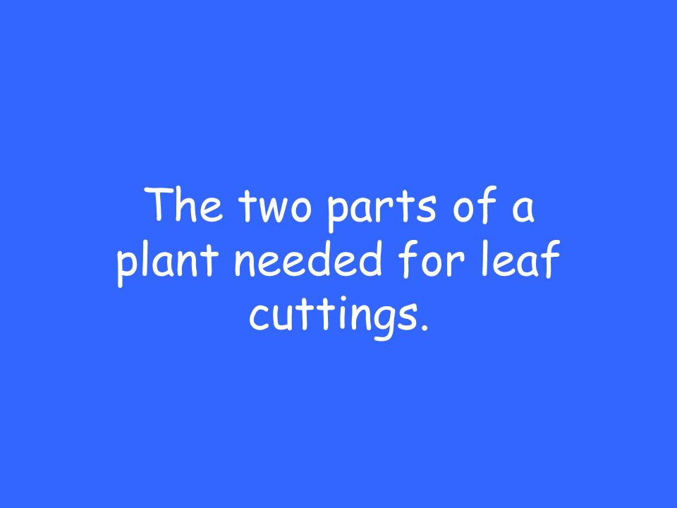 The two parts of a plant needed for leaf cuttings.