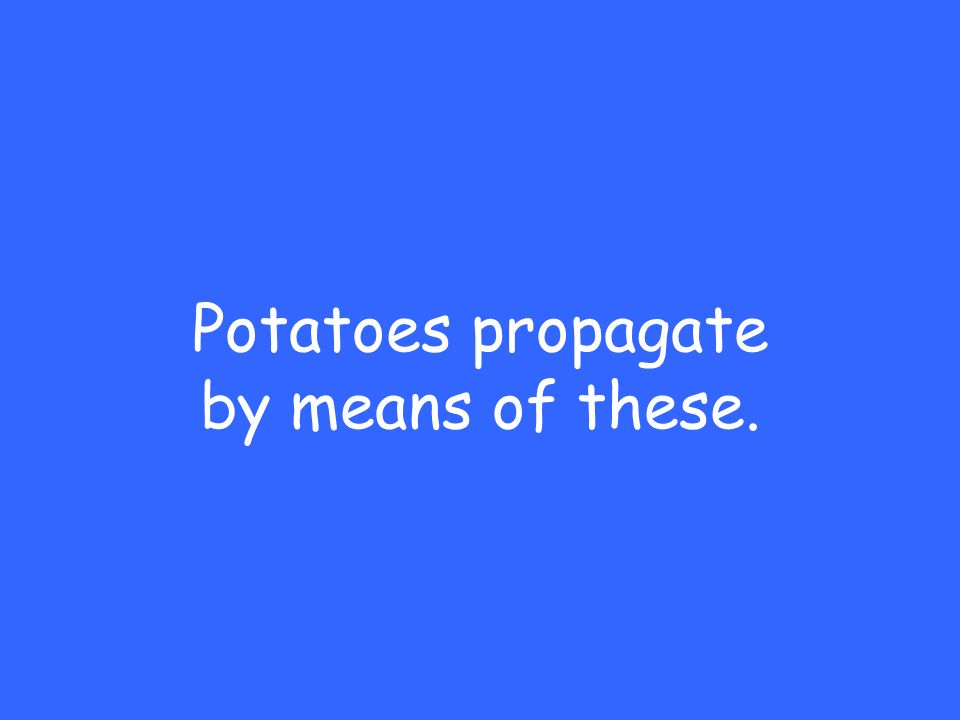 Potatoes propagate by means of these.