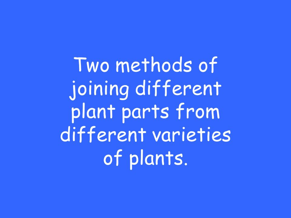 Two methods of joining different plant parts from different varieties of plants.