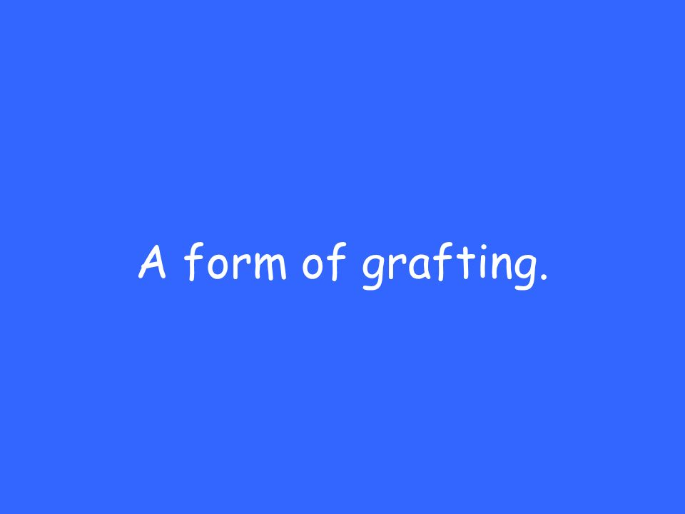 A form of grafting.