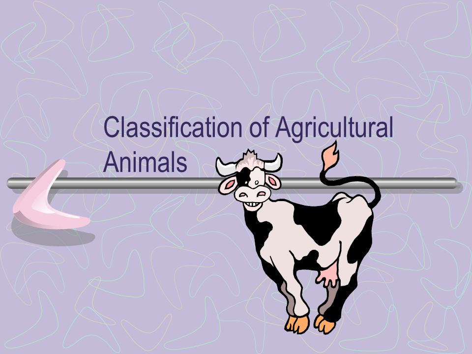 Classes Amphibia: frogs, toads Reptilia: turtles, snakes, lizards Aves: birds Mammalia: horses, cattle, pigs