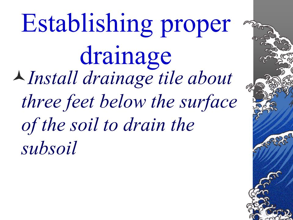 Drainage Good drainage ensures a balance between air and water in the soil. This balance encourages proper root growth
