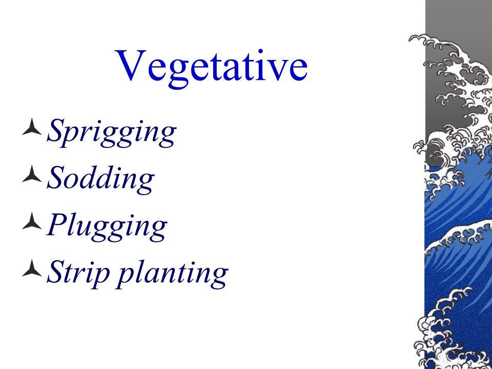 Starting a Lawn Two ways Seeding Vegetative