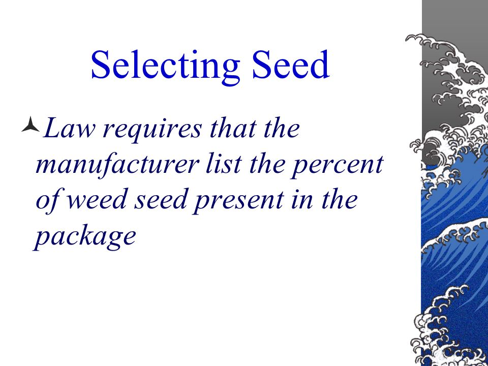 Selecting Seed Weed Seed – not desirable in lawn mixtures Many weed seeds are difficult to remove because of their size