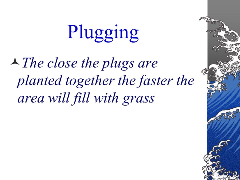 Plugging small plugs of soil with grass plants in them are planted in holes evenly spaced throughout the yard