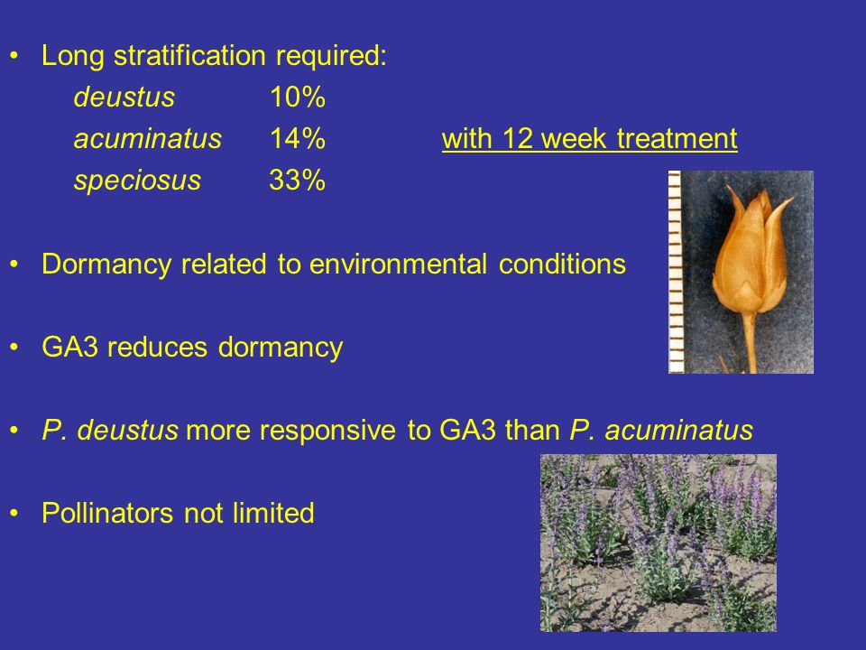 Long stratification required: deustus10% acuminatus14% with 12 week treatment speciosus33% Dormancy related to environmental conditions GA3 reduces dormancy P.