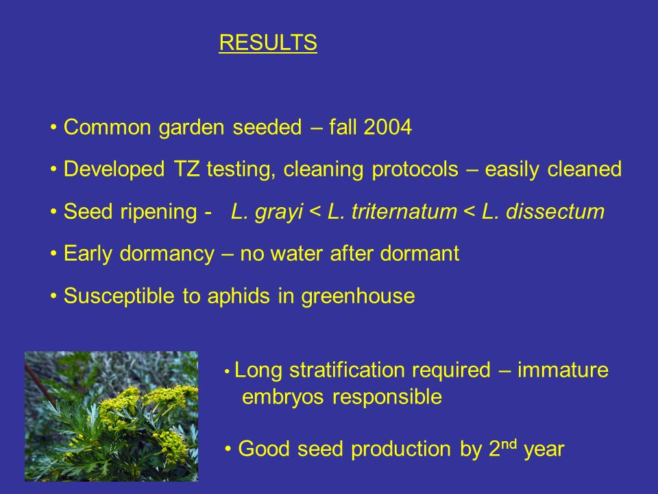 RESULTS Common garden seeded – fall 2004 Developed TZ testing, cleaning protocols – easily cleaned Seed ripening - L.