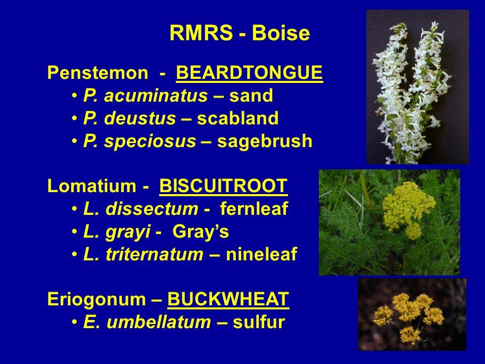 RMRS - Boise Penstemon - BEARDTONGUE P. acuminatus – sand P. deustus – scabland P. speciosus – sagebrush Lomatium - BISCUITROOT L. dissectum - fernlea