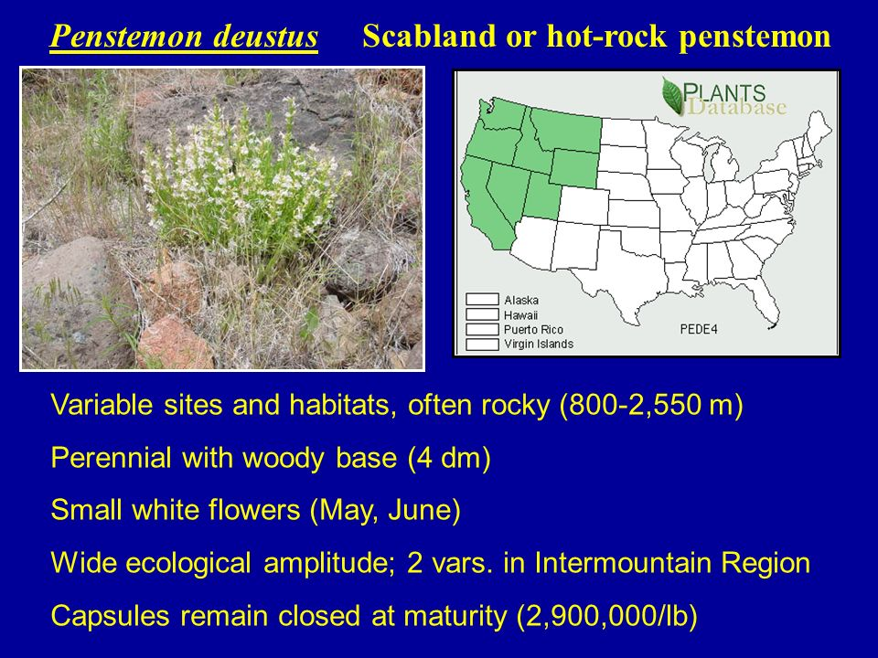 RESULTS Common gardens in ID, OR, NV - 2003-2006 Well drained soils essential due to damping off Developed TZ testing, cleaning protocols