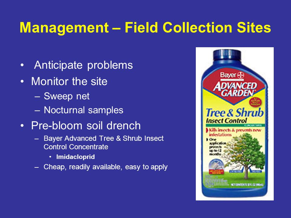 Management – Field Collection Sites Anticipate problems Monitor the site –Sweep net –Nocturnal samples Pre-bloom soil drench –Bayer Advanced Tree & Sh