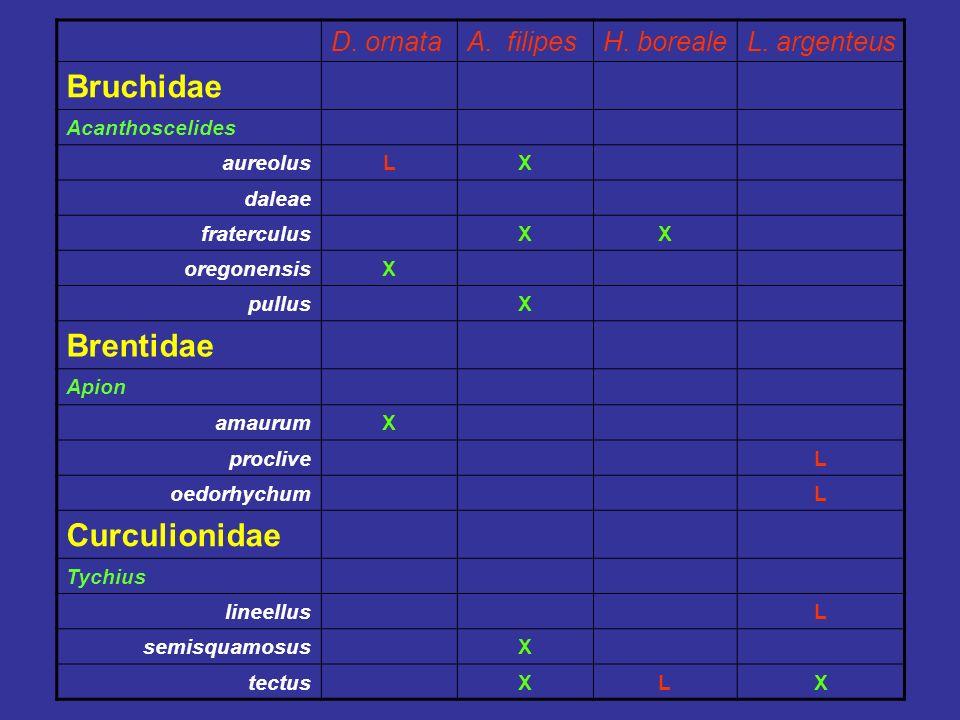 D. ornataA. filipesH. borealeL. argenteus Bruchidae Acanthoscelides aureolusLX daleae fraterculusXX oregonensisX pullusX Brentidae Apion amaurumX proc