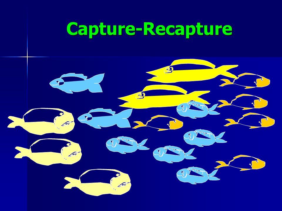 Capture-Recapture
