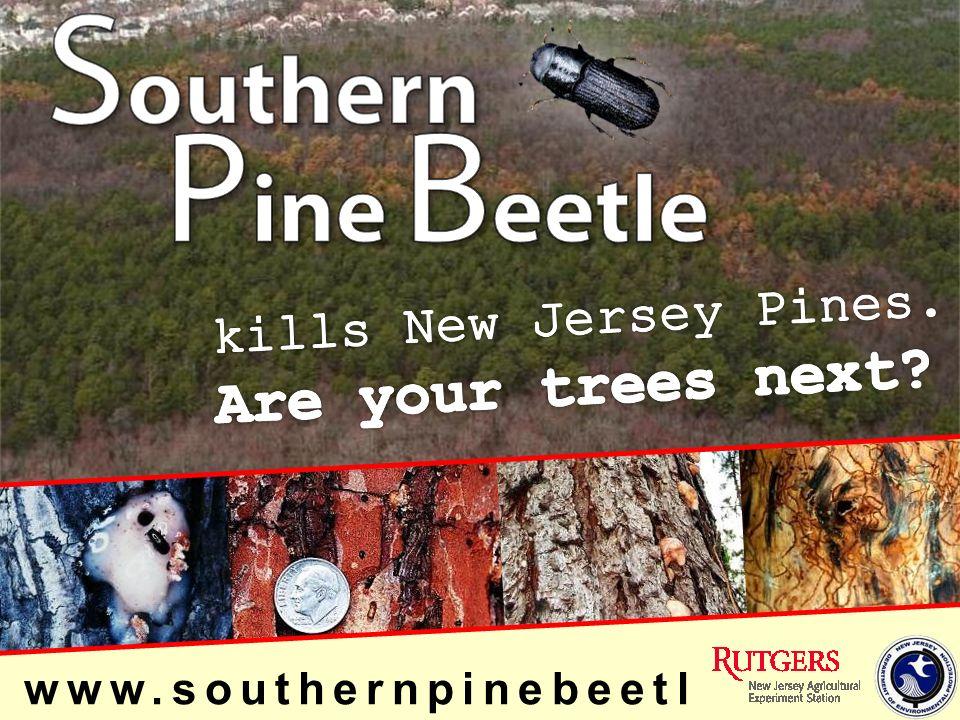 www.southernpinebeetl e.nj.gov