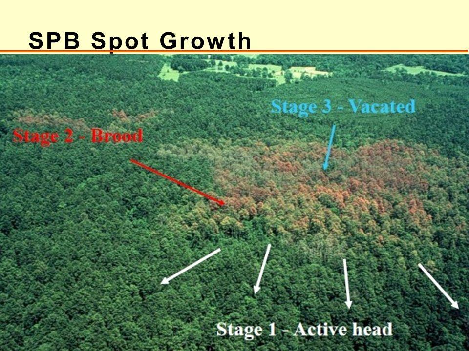 SPB Spot Growth