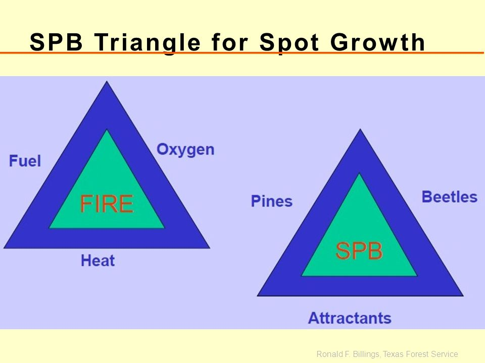SPB Triangle for Spot Growth Ronald F. Billings, Texas Forest Service