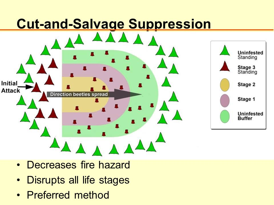 Cut-and-Salvage Suppression Decreases fire hazard Disrupts all life stages Preferred method