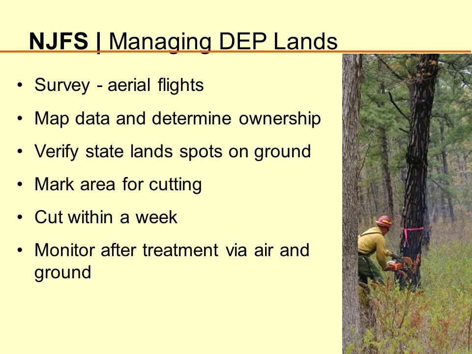 NJFS | Managing DEP Lands Survey - aerial flights Map data and determine ownership Verify state lands spots on ground Mark area for cutting Cut within