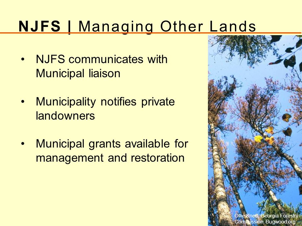 NJFS | Managing Other Lands NJFS communicates with Municipal liaison Municipality notifies private landowners Municipal grants available for managemen