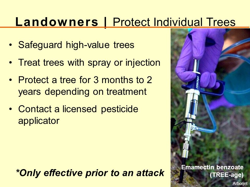 Landowners | Protect Individual Trees Safeguard high-value trees Treat trees with spray or injection Protect a tree for 3 months to 2 years depending