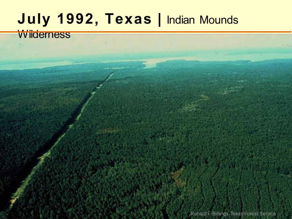 July 1992, Texas | Indian Mounds Wilderness Ronald F. Billings, Texas Forest Service