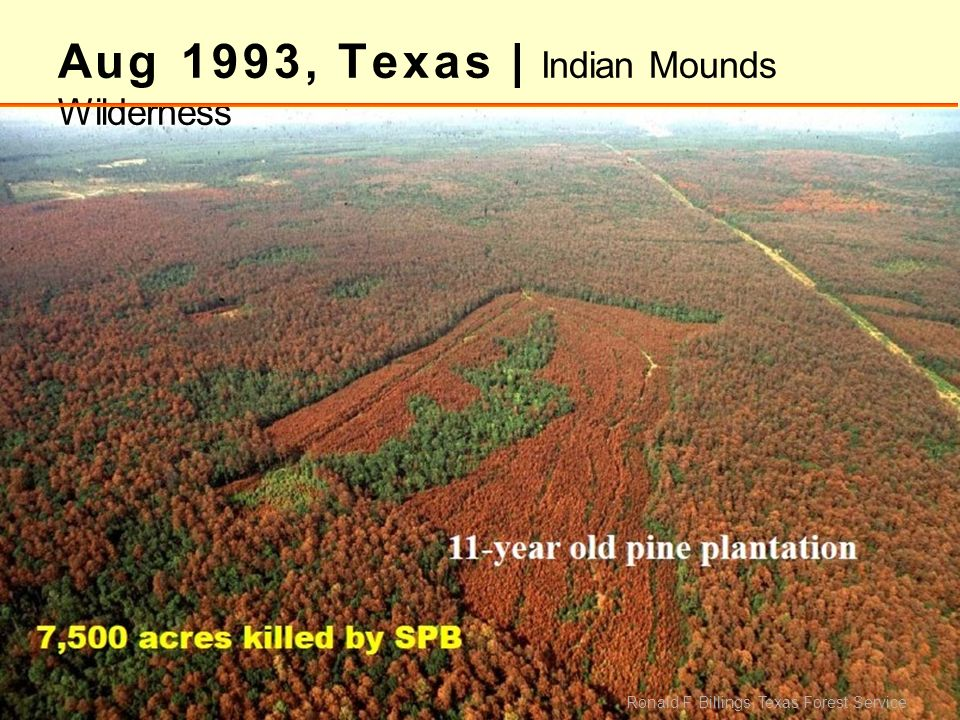 Aug 1993, Texas | Indian Mounds Wilderness Ronald F. Billings, Texas Forest Service