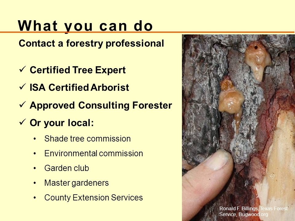 What you can do Contact a forestry professional Certified Tree Expert ISA Certified Arborist Approved Consulting Forester Or your local: Shade tree co