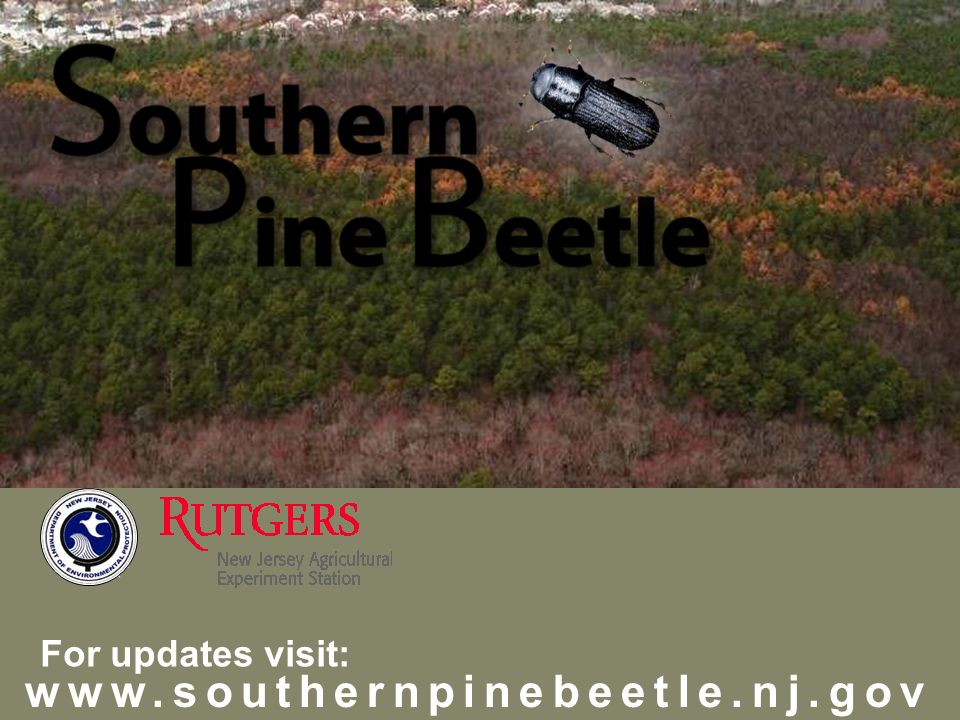 www.southernpinebeetle.nj.gov For updates visit: