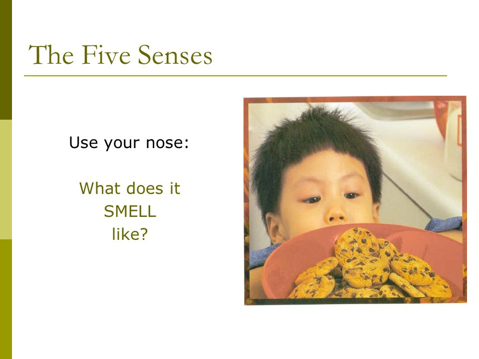 The Five Senses Use your nose: What does it SMELL like