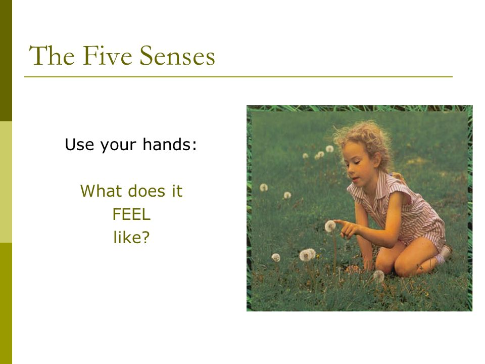 The Five Senses Use your hands: What does it FEEL like?