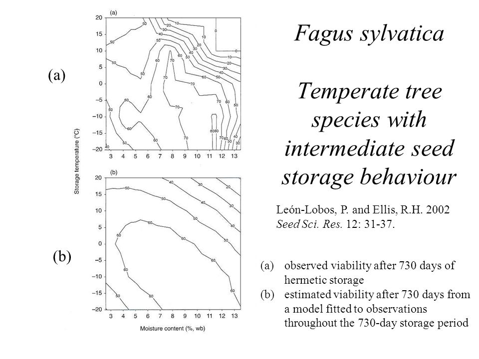 Fagus sylvatica Temperate tree species with intermediate seed storage behaviour León-Lobos, P. and Ellis, R.H. 2002 Seed Sci. Res. 12: 31-37. (a)obser