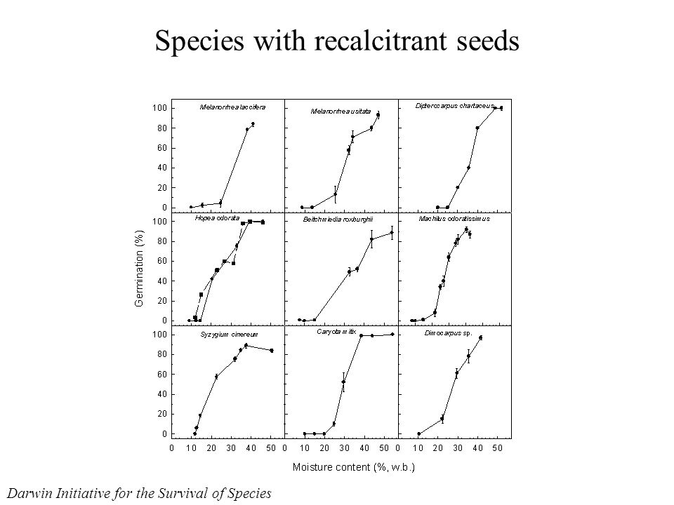 Species with recalcitrant seeds Darwin Initiative for the Survival of Species