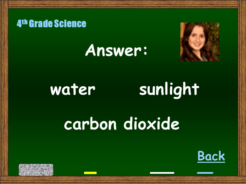 What are the 3 things a plant needs to perform photosynthesis 4 th Grade Science Next