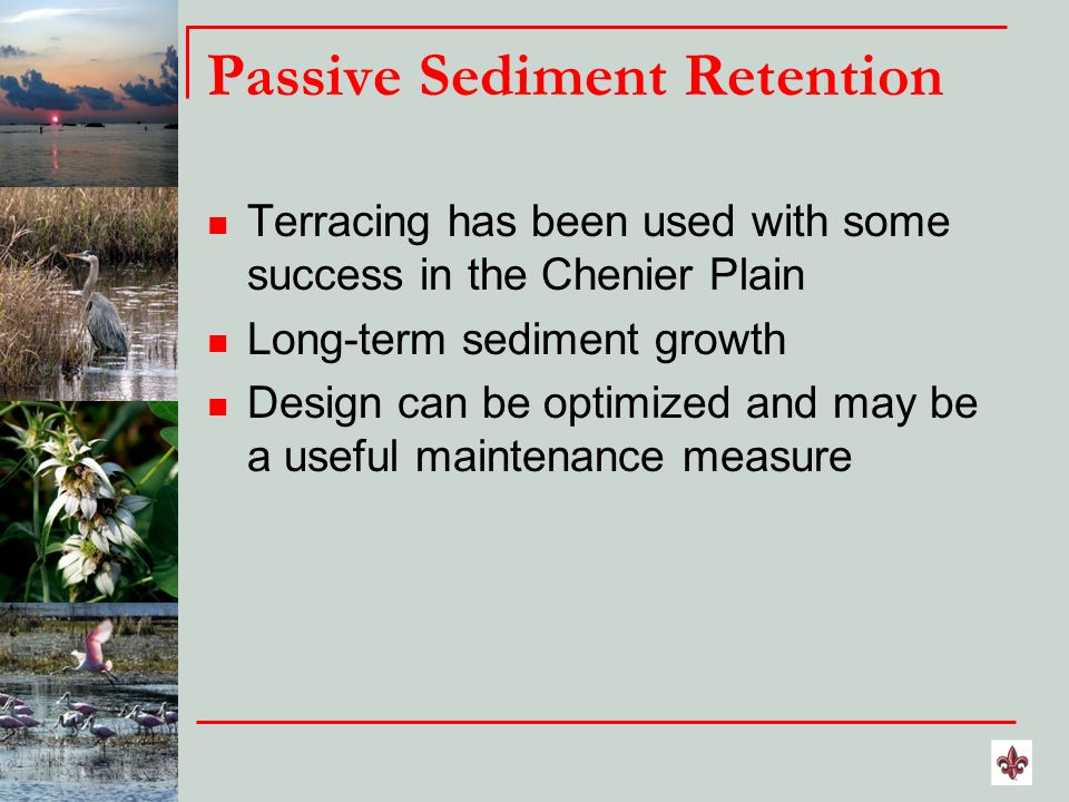Passive Sediment Retention Terracing has been used with some success in the Chenier Plain Long-term sediment growth Design can be optimized and may be