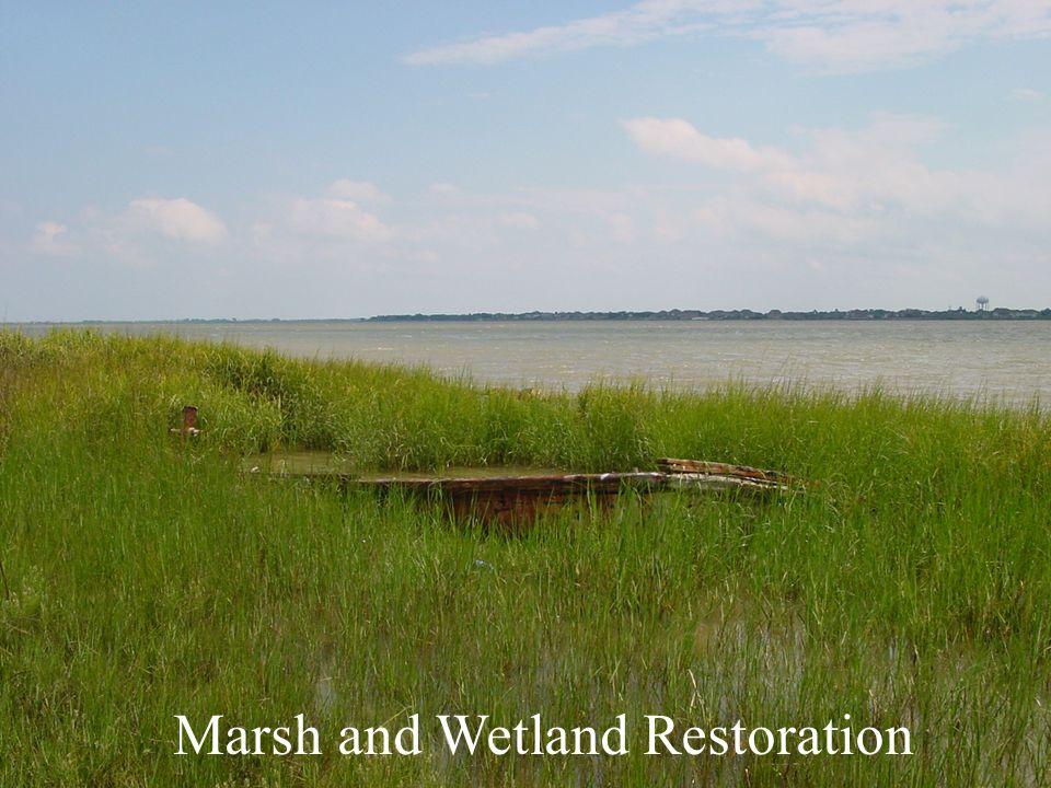 Marsh and Wetland Restoration