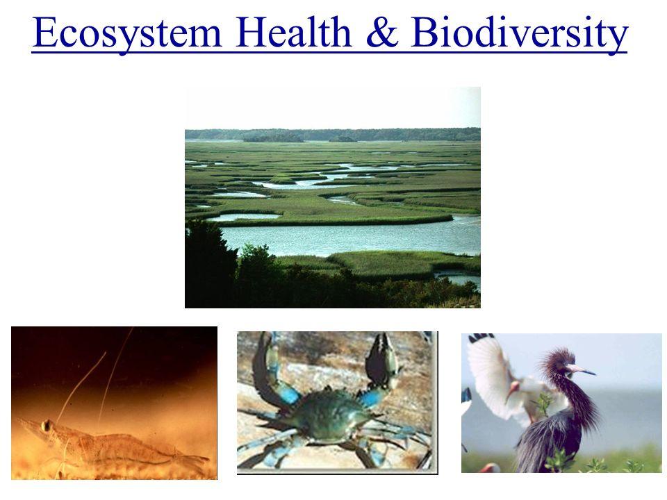 Ecosystem Health & Biodiversity