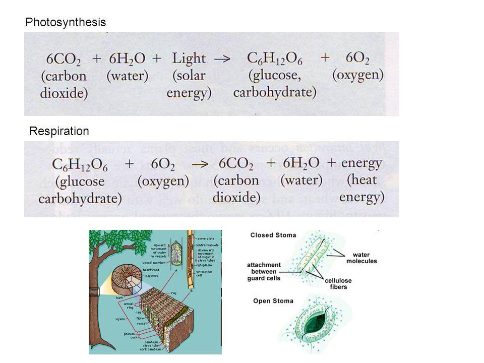 Photosynthesis Respiration
