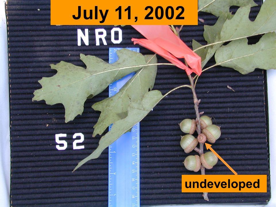 undeveloped July 11, 2002