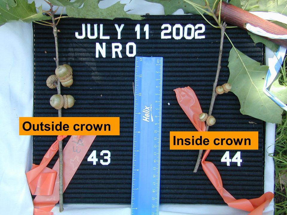 Outside crown Inside crown