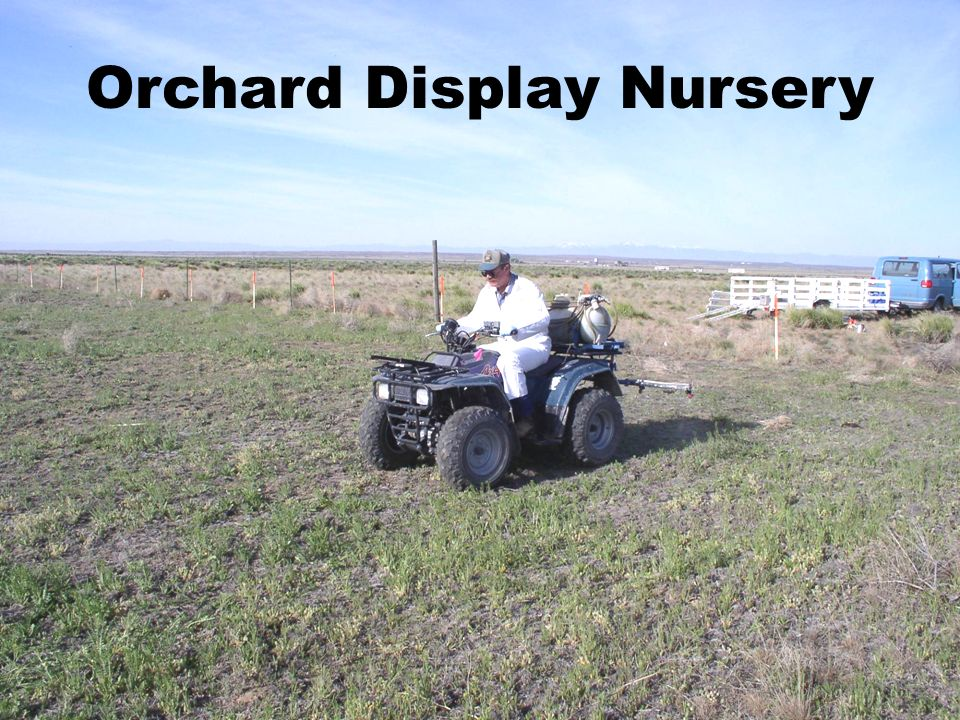 Orchard Display Nursery