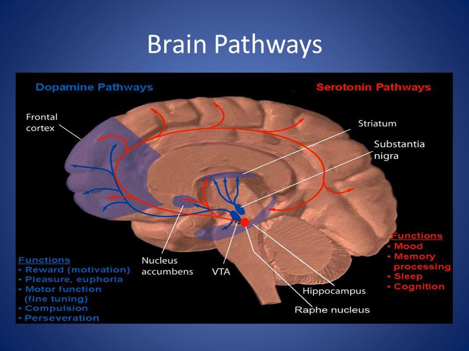 Brain Chemicals Dopamine – a feel good chemical.
