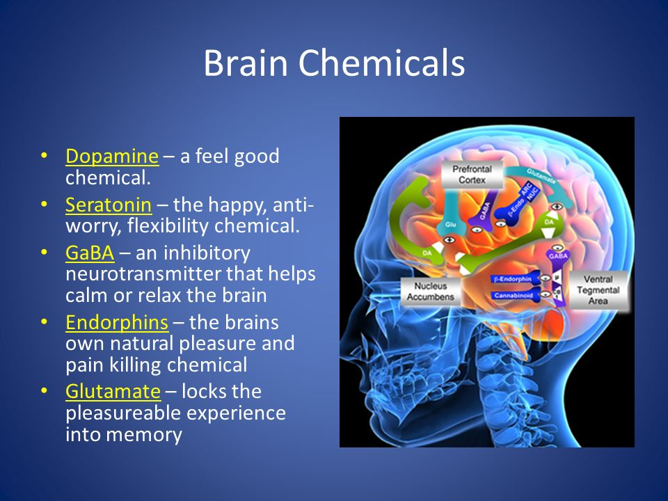 Brain Chemicals Dopamine – a feel good chemical. Seratonin – the happy, anti- worry, flexibility chemical. GaBA – an inhibitory neurotransmitter that