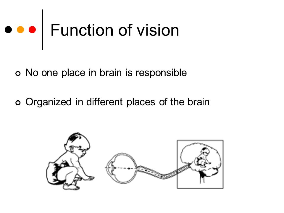 Function of vision No one place in brain is responsible Organized in different places of the brain