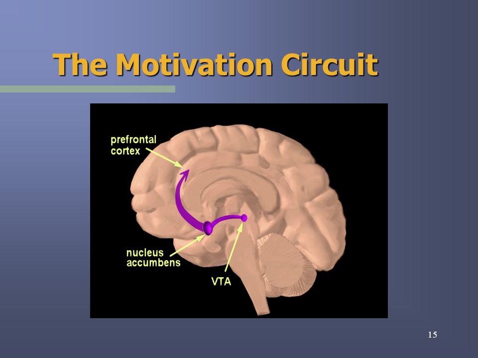 15 The Motivation Circuit