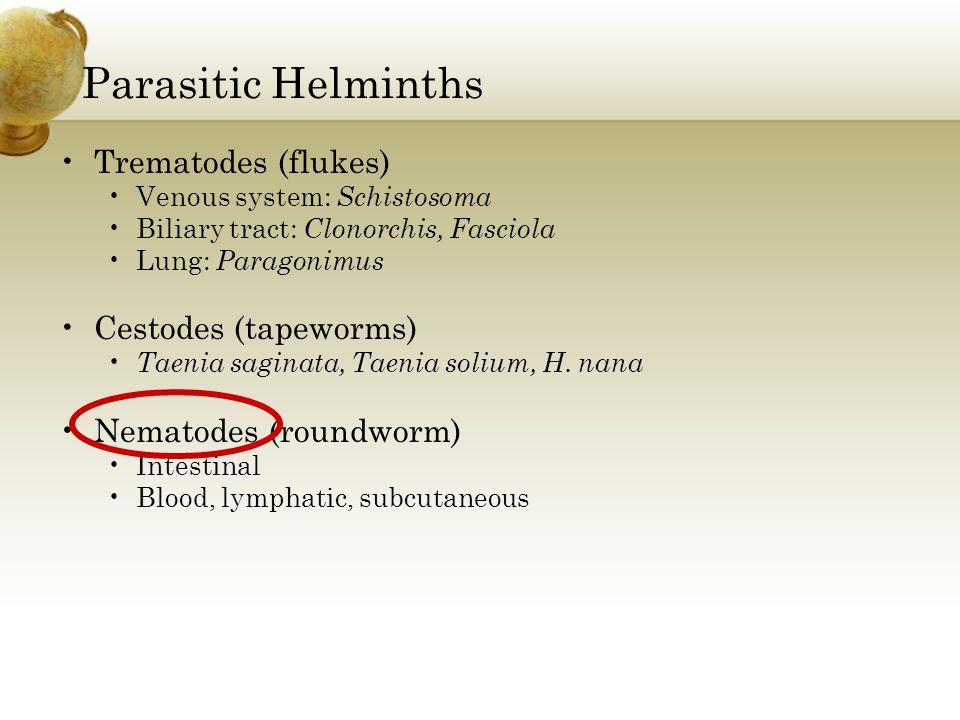 Parasitic Helminths Trematodes (flukes) Venous system: Schistosoma Biliary tract: Clonorchis, Fasciola Lung: Paragonimus Cestodes (tapeworms) Taenia s